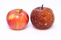 Ώριμα και σάπια μήλα σε ένα άσπρο υπόβαθρο Στοκ Εικόνες