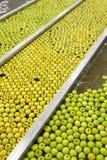 Ώριμα μήλα που υποβάλλονται σε επεξεργασία και που μεταφέρονται για τη συσκευασία Στοκ Εικόνες
