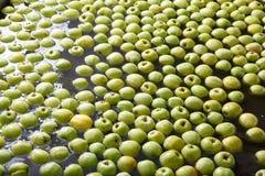 Ώριμα μήλα που υποβάλλονται σε επεξεργασία και που μεταφέρονται για τη συσκευασία Στοκ Φωτογραφίες