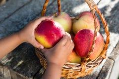 Ώριμα μήλα στο καλάθι στον αγροτικό πίνακα Κόκκινα μήλα φθινοπώρου Στοκ Φωτογραφίες