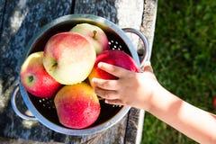 Ώριμα μήλα στο καλάθι στον αγροτικό πίνακα Κόκκινα μήλα φθινοπώρου Στοκ εικόνες με δικαίωμα ελεύθερης χρήσης
