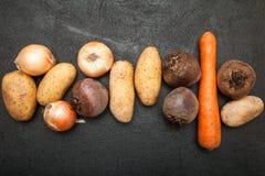 Ώριμα οργανικά λαχανικά από τον κήπο στοκ φωτογραφίες