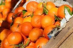 Ώριμα πορτοκάλια Στοκ εικόνες με δικαίωμα ελεύθερης χρήσης