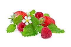 Ώριμα φράουλα και σμέουρο με τη μέντα Στοκ Εικόνες