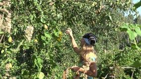 Ώριμα φρούτα αχλαδιών συγκομιδών κοριτσιών γυναικών αγροτών στο ψάθινο καλάθι fruiter στη φυτεία δενδροφυτειών 4K απόθεμα βίντεο