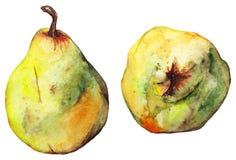 Ώριμα φρούτα αχλαδιών Watercolor κιτρινοπράσινα διανυσματική απεικόνιση