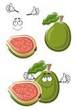 Ώριμα φρούτα γκοϋαβών κινούμενων σχεδίων πράσινα Στοκ εικόνες με δικαίωμα ελεύθερης χρήσης