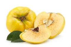 Ώριμα φρούτα κυδωνιών στοκ εικόνες