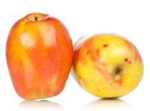 Ώριμα juicy μήλα Στοκ εικόνα με δικαίωμα ελεύθερης χρήσης