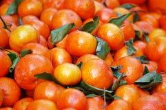 ώριμα s αγοράς αγροτών tangerines σω&r Στοκ εικόνες με δικαίωμα ελεύθερης χρήσης