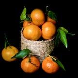 Ώριμα Tangerines με βγάζουν φύλλα Στοκ Φωτογραφίες