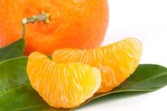 ώριμα tangerines φετών φύλλων Στοκ Εικόνες