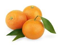 ώριμα tangerines φύλλων Στοκ εικόνα με δικαίωμα ελεύθερης χρήσης