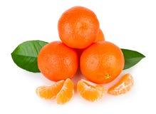 ώριμα tangerines φύλλων Στοκ Εικόνα