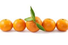 ώριμα tangerines στοκ εικόνα με δικαίωμα ελεύθερης χρήσης
