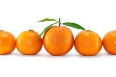 ώριμα tangerines στοκ εικόνες με δικαίωμα ελεύθερης χρήσης