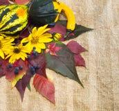 Ώριμες κολοκύθες Autumnr, φύλλωμα, λουλούδια. Στοκ Φωτογραφία