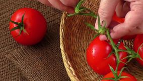 Ώριμες κόκκινες ντομάτες σε ένα υπόβαθρο burlap απόθεμα βίντεο