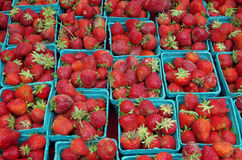 Ώριμες κόκκινες φράουλες στα πρασινωπά μπλε εμπορευματοκιβώτια Στοκ φωτογραφία με δικαίωμα ελεύθερης χρήσης
