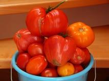 Ώριμες μεγάλες ντομάτες Στοκ εικόνες με δικαίωμα ελεύθερης χρήσης