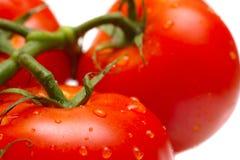 ώριμες ντομάτες στοκ φωτογραφία
