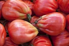 ώριμες ντομάτες Στοκ Φωτογραφίες