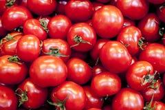 Ώριμες νόστιμες κόκκινες ντομάτες Οργανικές ντομάτες του χωριού αγοράς φρέσκες ντομάτες Ποιοτικό υπόβαθρο από τις ντομάτες Στοκ Εικόνες