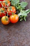 Ώριμες οργανικές ντομάτες με oregano χορταριών Στοκ Φωτογραφία