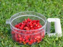 Ώριμες φράουλες σε ένα διαφανές πλαστικό εμπορευματοκιβώτιο στο χορτοτάπητα στοκ εικόνες με δικαίωμα ελεύθερης χρήσης