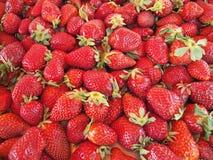 ώριμες φράουλες στοκ φωτογραφίες με δικαίωμα ελεύθερης χρήσης
