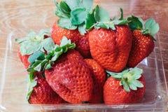 Ώριμες φράουλες Στοκ εικόνες με δικαίωμα ελεύθερης χρήσης