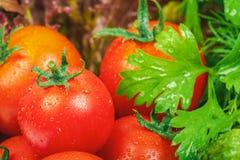 Ώριμες φυσικές ντομάτες με τα πράσινα χορτάρια στοκ εικόνα