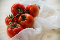 Ώριμες φυσικές ντομάτες που αυξάνονται σε έναν κλάδο σε ένα θερμοκήπιο πεδίο βάθους ρηχό Στοκ Εικόνα