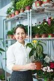 Ώριμη γυναίκα με Aphelandra στο κατάστημα Στοκ εικόνες με δικαίωμα ελεύθερης χρήσης