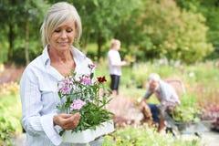 Ώριμη γυναίκα που επιλέγει τις εγκαταστάσεις στο κέντρο κήπων Στοκ φωτογραφίες με δικαίωμα ελεύθερης χρήσης
