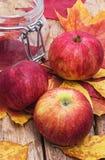 Ώριμη, γλυκιά συγκομιδή φθινοπώρου μήλων Στοκ Εικόνες