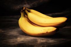 Ώριμη δέσμη μπανανών στο γκρίζο σκηνικό στούντιο στοκ φωτογραφία
