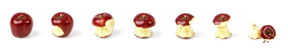 Ώριμη κόκκινη σύνθεση μήλων που τίθεται το διαφορετικό δάγκωμα που απομονώνεται με στο λευκό Στοκ Εικόνες