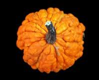 Ώριμη πορτοκαλιά κολοκύθα στοκ εικόνα με δικαίωμα ελεύθερης χρήσης