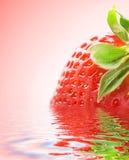 ώριμη φράουλα Στοκ Εικόνες