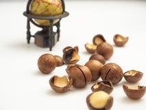 Ώριμη macadamia κινηματογράφηση σε πρώτο πλάνο καρυδιών Μικρό βάθος του πεδίου Στοκ Εικόνα