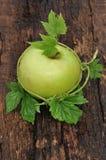 Ώριμος πράσινο μήλου Στοκ φωτογραφία με δικαίωμα ελεύθερης χρήσης