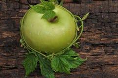 Ώριμος πράσινο μήλου Στοκ φωτογραφίες με δικαίωμα ελεύθερης χρήσης