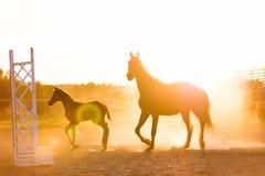 Ώριμο άλογο και ένα πουλάρι που στέκεται στον τομέα άμμου Στοκ φωτογραφίες με δικαίωμα ελεύθερης χρήσης