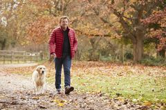 Ώριμο άτομο στον περίπατο φθινοπώρου με το Λαμπραντόρ στοκ φωτογραφία