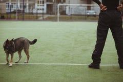 Ώριμο αρσενικό τέντωμα αθλητών υπαίθριο Στοκ εικόνα με δικαίωμα ελεύθερης χρήσης