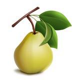 Ώριμο αχλάδι με τα πράσινα φύλλα. Στοκ Εικόνες