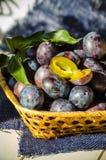 Ώριμο δαμάσκηνο φρούτων Στοκ Φωτογραφίες