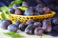 Ώριμο δαμάσκηνο φρούτων Στοκ Φωτογραφία