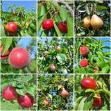 Ώριμο κολάζ φρούτων Στοκ φωτογραφία με δικαίωμα ελεύθερης χρήσης